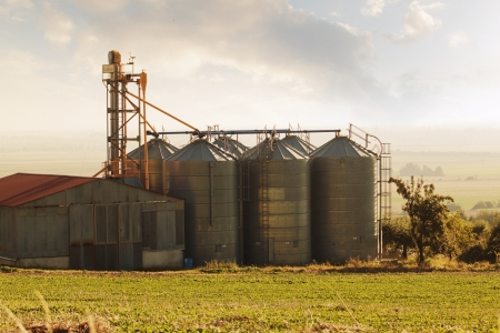 Silos for storing wheat and other cereal grains.