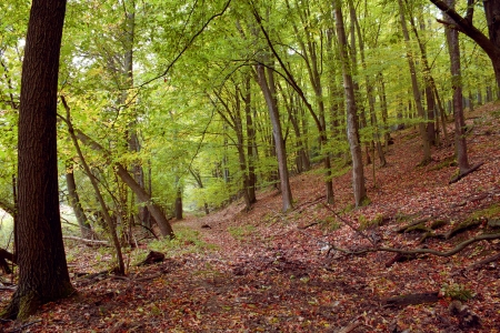 Autumn forest in sunny day  photo