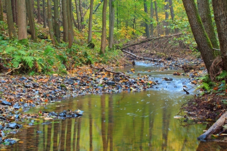 Autumn stream in the forest in sunny day  photo
