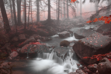 Autumn stream in the forest in misty day  photo