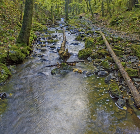 Forest stream in the autumn photo