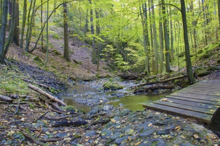 Autumn stream in the forest in sunny day