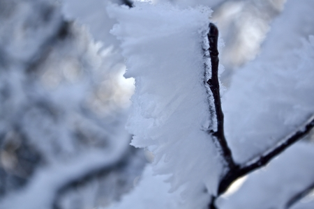 Close-up of frost on a tree in winter  photo