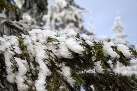 Close-up of frost on a tree in winter
