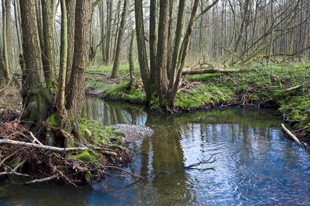moistness: early spring scenery  Stock Photo
