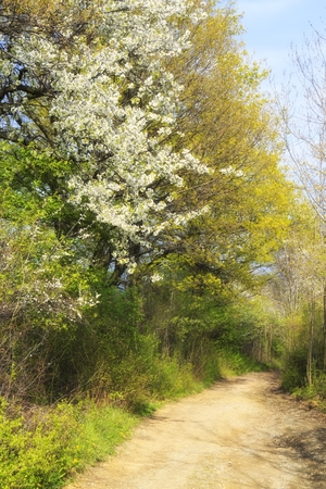 dreamy spring landscape