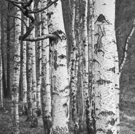 vintage photo of forest  Stock Photo
