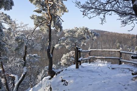 Winter Wonderland  photo