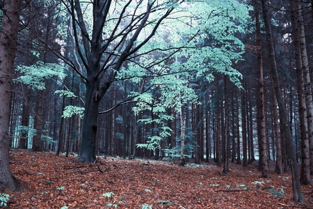 unreal forest photo