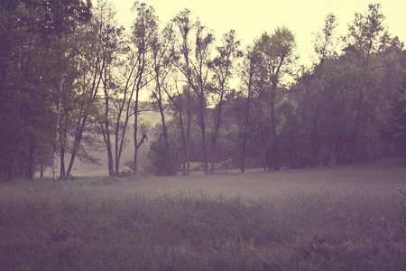 foggy morning on meadow. sunrise landscape photo with vintage effect  photo