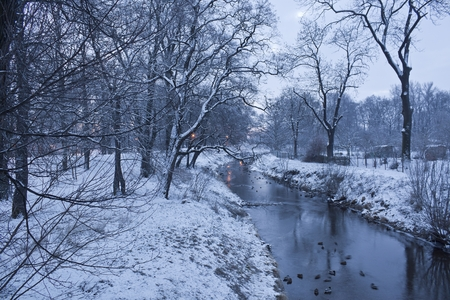 Winter river with ducks early morning Stock Photo