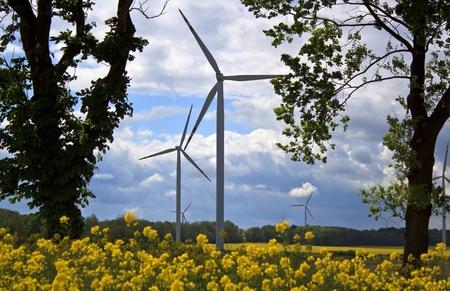 Wind turbines and yellow colza rape field Stock Photo