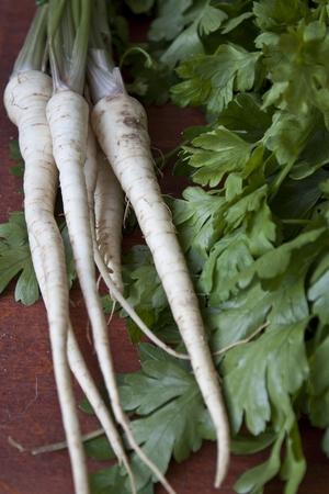 perejil: raíz de perejil  Foto de archivo