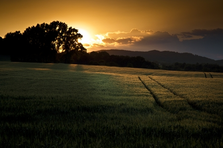 zoning: Beautiful summer sunset over the fields and forest