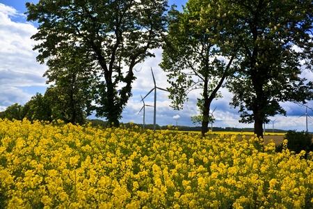 colza: Wind turbines and yellow colza rape field Stock Photo