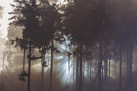 sunlight through misty forest trees