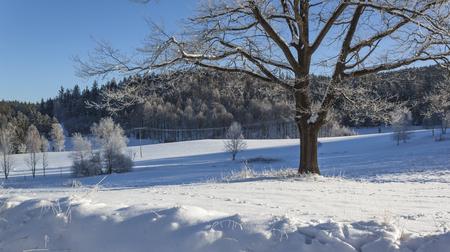 Winter Wonderland  Standard-Bild