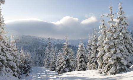 Winter wonderland 写真素材