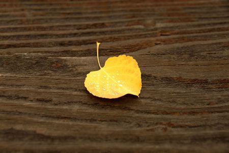 A autumn Colorado Aspen leaf lays on aged wood. photo