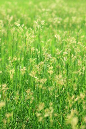 clemency: morning grass 2 Stock Photo