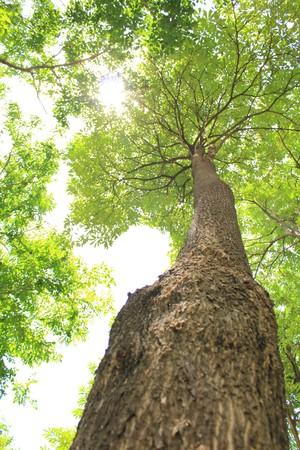 Natural and clean air