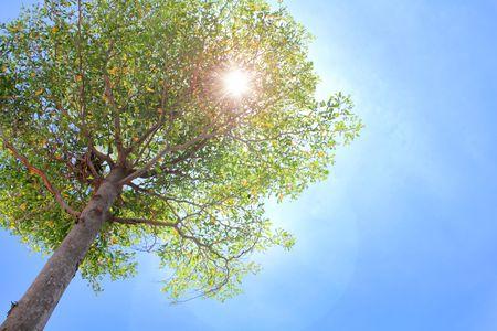 A tree with sun light