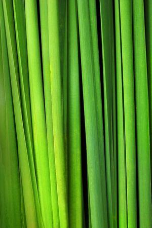 Green leaf background  Standard-Bild