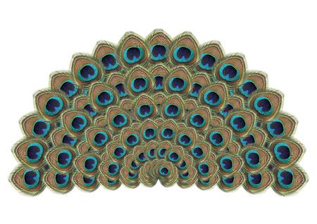 peacock feathers: Pluma del pavo real aislado en blanco
