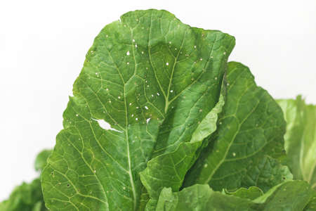 Organic vegetables Non-toxic vegetables Pesticide residue free