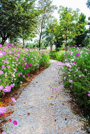 Stone walkway in the park with beautiful flowers