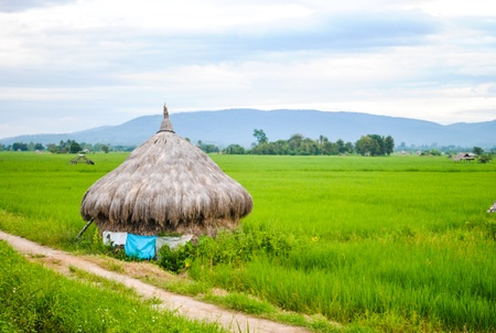 Grass Hut in a Rice Field