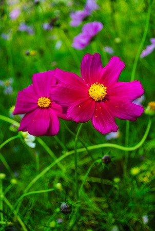 Beautiful pink flower in a garden