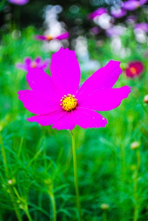 pink flower on green foliage background
