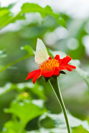Butterfly on orange flower Stock Photo - 15209463