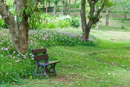Bench in the flower garden. photo