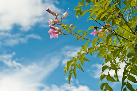 Pink abloom flower in sunny spring day in front of blue sky Stock Photo - 14980815