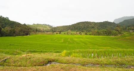 Green Terraced Rice Field in Chiang mai, Thailand Stock Photo - 15515857
