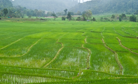 Green Terraced Rice Field in Chiang mai, Thailand Stock Photo - 15515865