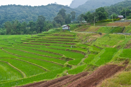 Green Terraced Rice Field in Chiang mai, Thailand Stock Photo - 15515992