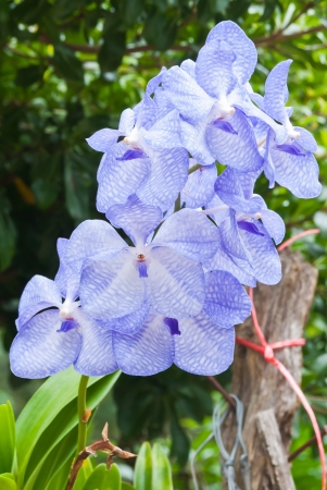Beautiful purple orchid Stock Photo - 15515788