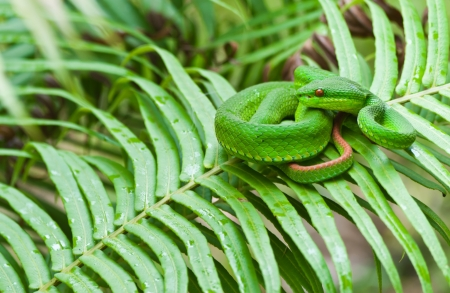 Green snake on leafs Stock Photo - 15515634