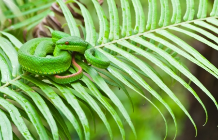 Green snake on leafs  Stock Photo - 15328828