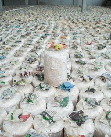 Infected mushroom bag at mushroom farm, Thailand  Editorial
