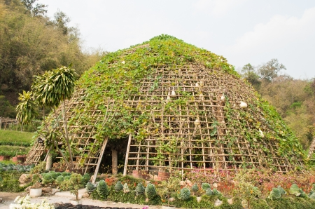entrance arbor: Vegetable tunnel at Chiang Mai, Thailand Stock Photo