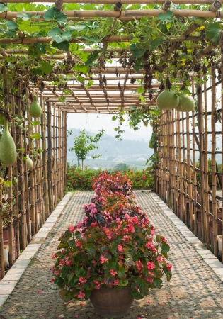 entrance arbor: Bamboo tunnel in the garden covered by squash