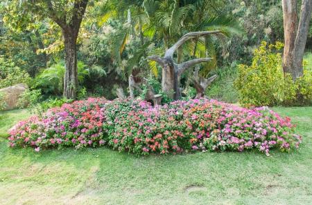 impatiens: Colorful Impatiens in the garden  Stock Photo