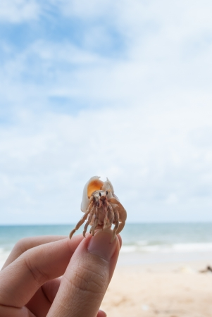 Hermit crab in hand on the beach