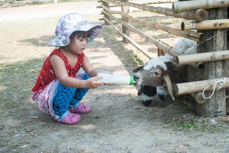 Asian Girl enjoys feeding a sheep Stock Photo