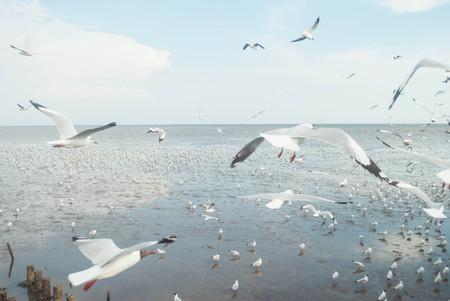 Seagull Flying Into the Sunset at Bangpu, Thailand Stock Photo