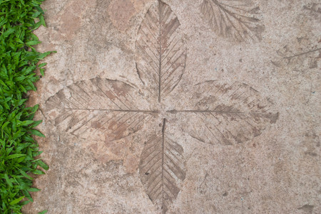 Concrete walkways print leaves , on lawn